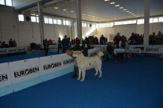 Mezinárodní výstava Nitra 4.12.2016