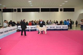 Mezinárodní výstava Nitra 3.12.2016